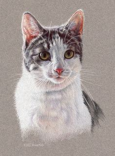 "Prints Available! I do all I can to honor the animals I know, have seen, and love. That is why I have redone the painting of my cat, Furby. My first ""professional"" painting, also called ""Furby"" was..."