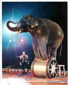 Positive Detroit: The Spectacular Shrine Circus Returns to Metro Detroit March 18                                                                                                                                                                                 More