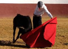 Silveti vuelve en Irapuato - mundotoro.com #America #toros #Silveti
