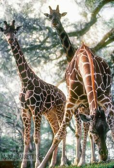 A213 :: Animal Stock Images Gallery