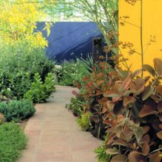 Love the painted adobe walls. And the privacy! Small Gardens, Outdoor Gardens, Mexican Garden, Blue Garden, Desert Plants, Garden Theme, Landscaping Plants, Cacti And Succulents, Landscape Design