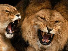 Big Fierce Animals Rare | Miles de fondos en todas las resoluciones.