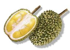 """durian - also known as """"the king of fruits"""". The edible flesh (yellow part inside) emits a distinctive odour, strong and penetrating even when the husk is intact. Some people regard the durian as fragrant; others find the aroma overpowering and offensive. It taste like egg custard."""