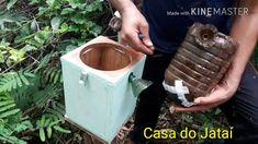 Transferência de abelha Borá pelo método de indução, (tetragona clavipes...
