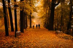 "family in misty park - tartu, estonia  <a href=""https://instagram.com/efemeerne/"">INSTAGRAM</a>"