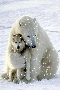 This pic is real. A polar bear came for multiple days to play with the dogs of a sled team. When the bear first arrived the owner of the dogs thought they were goners. Didn't happen. Never once did the bear harm the dogs.