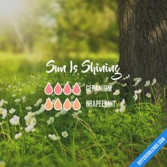 Sun Is Shining - Essential Oil Diffuser Blend