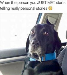 17 Funny Dog Pictures That Will Make You Laugh - Funny Dog Quotes - affordable custom pet memorials for everyone. The post 17 Funny Dog Pictures That Will Make You Laugh appeared first on Gag Dad. Humor Animal, Funny Animal Memes, Animal Quotes, Cute Funny Animals, Dog Memes, Funny Animal Pictures, Dog Pictures, Funny Dogs, Funny Memes