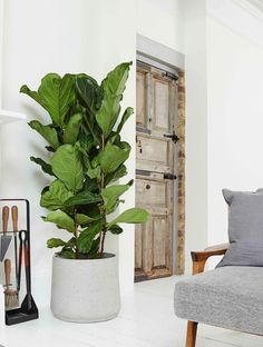 Yoga Decor, Interior Plants, Ficus, Modern House Design, Home Deco, Home And Living, Indoor Plants, Living Room Decor, Sweet Home