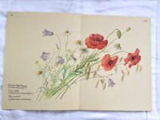 Vintage Botanical Book Page  Red Poppy  Harebell  Mayweed