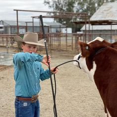 Stock Show Stories Videos   Stock Show Stories Watch to learn more! Show Cattle, Cattle Barn, Horse Lead Rope, Show Steers, Don T Rush, Fly Repellant, Rope Halter, Breaking Hair, Showing Livestock