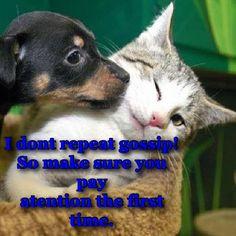 cute dog& cat