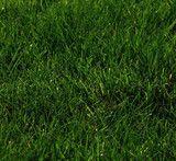 Hobbs & Hopkins Ltd. | ProTime Lawn Seed | Shade Mix