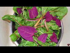 LOBODA, distruge celulele canceroase stimuleaza metabolismul si previne imbatranirea prematura - YouTube Metabolism, Spinach, Cancer, Vegetables, Food, Youtube, Medicine, Therapy, Plant