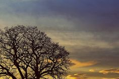 tree-silhouette-sunset-844103-print.jpg (1600×1066)