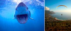 5 Killer Adventure Travel Experiences in Cape Town, South Africa — Vagabondish Visit South Africa, Cape Town South Africa, Travel Around The World, Around The Worlds, Great White Shark, Africa Travel, Travel Ideas, Adventure Travel, Whale