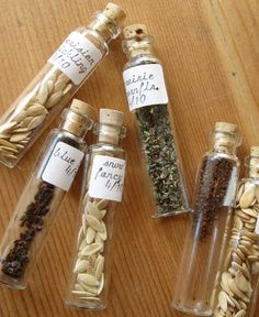 Seeds in test tubes with cork stoppers