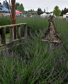 Port Williams Lavender12   Flickr - Photo Sharing!