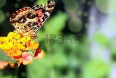 Biology, Botany, butterfly.