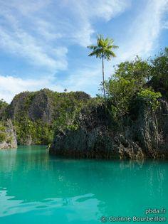 Iles de Raja Ampat - petit paradis