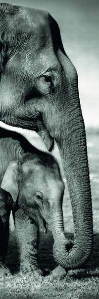 obrázek puzzlí Puzzle 1000 Slony