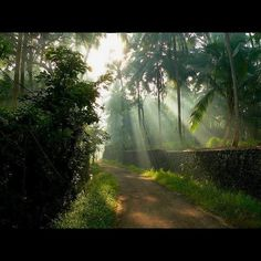 Beautiful Kerala.  Looks like the road leading from Amma's house.