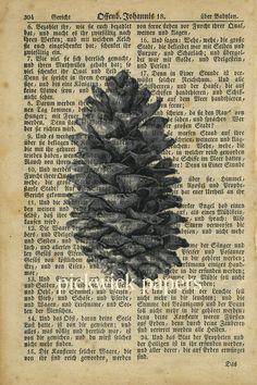 i love pinecones