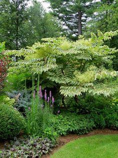 Gardens trees and shrubs on pinterest - Jardines con piedras blancas ...