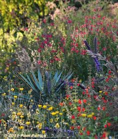 Yucca pallida and fall-blooming perennials in the Plano Prairie Garden