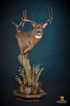 Deer Hunting Decor, Deer Head Decor, Whitetail Deer Hunting, Whitetail Bucks, Whitetail Deer Pictures, Deer Photos, Taxidermy Decor, Taxidermy Display, Deer Mount Decor