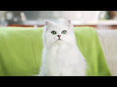 Cats Playing Patty-cake, what they were saying... - YouTube