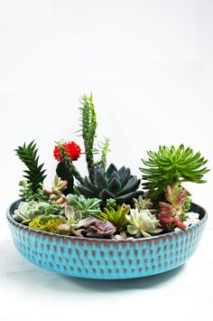 Jaw-Dropping Cool Tips: Backyard Garden Boxes Grass backyard garden deck diy projects.Small Backyard Garden Square Feet backyard garden planters how to build.Backyard Garden On A Budget. Succulent Bowls, Succulent Planter Diy, Cacti And Succulents, Planting Succulents, Potted Plants, Indoor Plants, Planting Flowers, Planter Ideas, Planter Garden