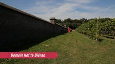 "Beautiful ""Domain Hof te Dieren"" is located in the village of Dieren, and is the largest walled vineyard in the Netherlands."