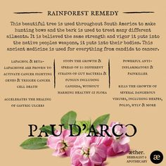 Pau D'Arco Benefits, herbal medicine, apothecary, plant medicine, cancer Health And Nutrition, Health Care, Medicinal Plants, Medical Advice, Herbal Medicine, Alchemy, Ayurveda, Apothecary, Natural Health
