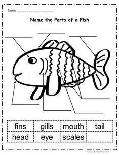 Summer Preschool Activities, Fish Activities, Preschool Education, Language Activities, Learning Activities, Ocean Lesson Plans, Ocean Words, Summer Lesson, Ocean Unit