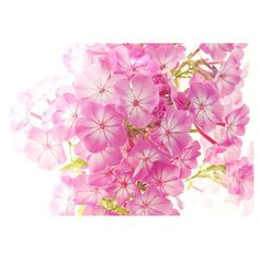 Floral Wall Art, Pink Phlox Macro Photography, Flower Photography, 8 x... (€9,42) ❤ liked on Polyvore featuring home, home decor, wall art, floral wall art, floral home decor, flower home decor, pink flower wall art and blossom wall art