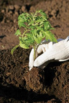 Learn how to start a vegetable garden from scratch and get your garden growing.