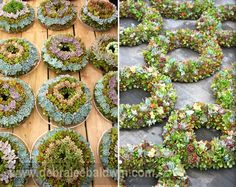 How to make a succulent wreath To make a succulent wreath, you'll need about 100 cuttings, a wire wreath form, 24-gauge florist's wire, a chopstick or ballpo[..]