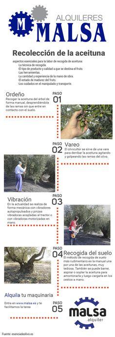 #infografía sobre las técnicas de #recoleccion de la #aceituna