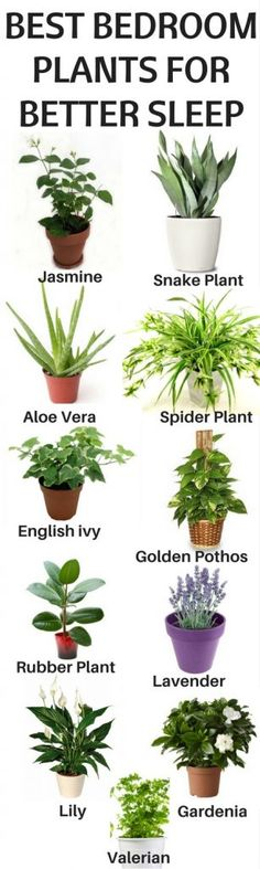 If you are unable to sleep well these plants will help you to change the quality of air in bedroom and make the environment feel more refreshing.