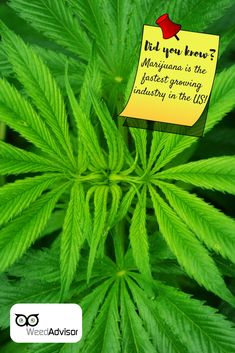 Since has become the fastest growing industry in the U. If becomes legal in all 50 states, the will become larger than the Get your now! Medical Marijuana, Cannabis, Fastest Growing Industries, Add Adhd, Packaging Supplies, North York, Muscle Spasms, Buy Weed Online, Ganja