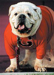 "UGA V (1990-1999) ""Defender of His Turf""  Mascot who became a celebrity...Georgia vs Auburn"