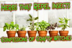 Herbs that Repel Insects http://herbalhealthcare-daw.blogspot.com/2013/05/herbs-that-repel-insects.html I get asked alot is there any herbs that repel insects  surprisingly there is a lot of herbs that Repel insects that otherwise would do harm to us or our pets so here is a small list of herbs and uses how to repel and what they repel