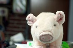 No recuerdo qué fue de este #cerdo, pero anduvo un tiempo en la casa.
