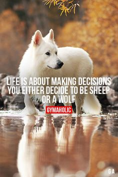 Life Is About Making DecisionsYou either decide to be a sheep or a wolf.http://www.gymaholic.co