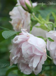 Aiken House & Gardens: Blossoms and Blooms