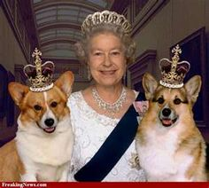 The Queen and her Corgis BET SHE CALLS THEM HER CHILDREN
