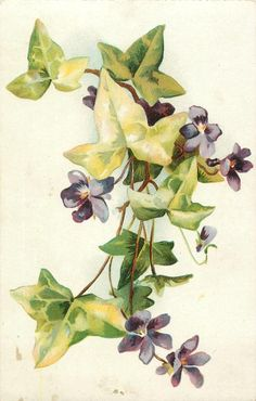 violets & ivy leaves, five purple flowers, one bud, two leaves at bottom
