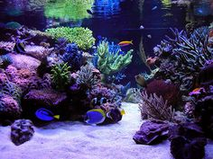 Best tanks from around the world. - Page 2 - Reef Central Online Community