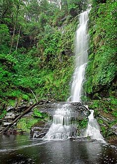 Erskine Falls is one of the best known waterfalls of the Otway Ranges and is certainly among the most visited. The falls are also the highest single drop of all the otway waterfalls.